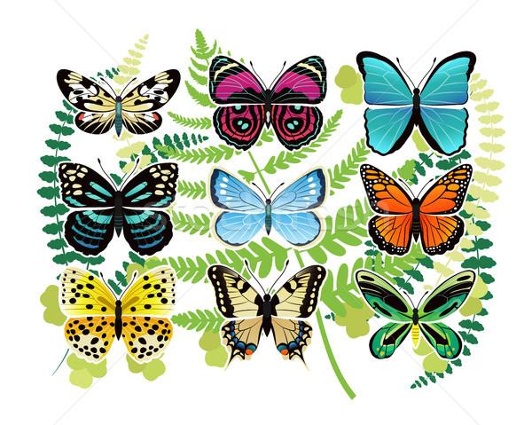 Tropical Butterflies Spescies Illustrations Set Stock photo © robuart