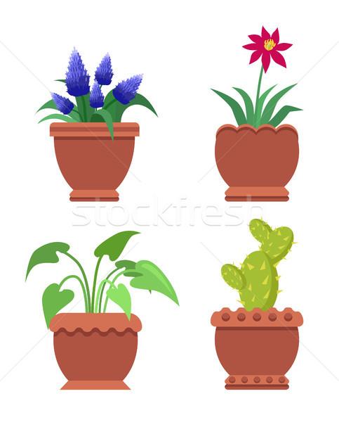 Virág kaktusz szoba növények virágzó szett Stock fotó © robuart