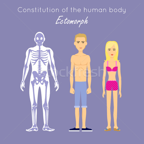 Constitution of Human Body. Ectomorph. Ectomorphic Stock photo © robuart