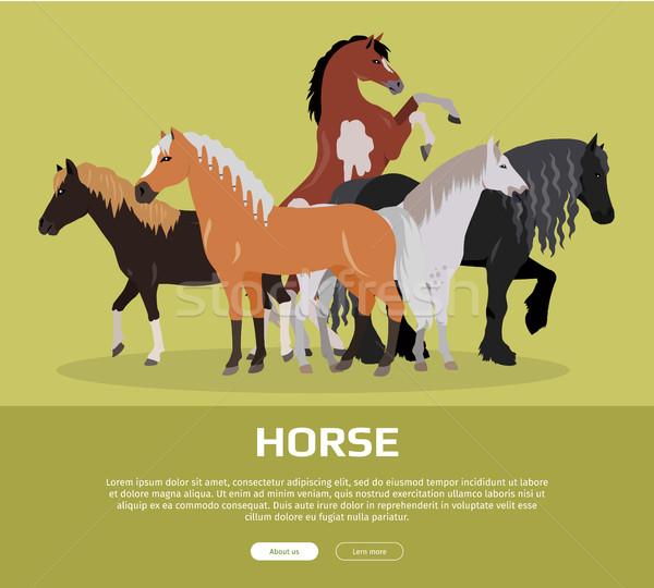 Paard stijl vector web banner groep Stockfoto © robuart