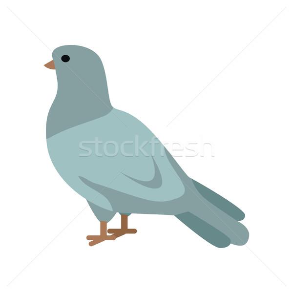 голубь дизайна стиль вектора внутренний Сток-фото © robuart