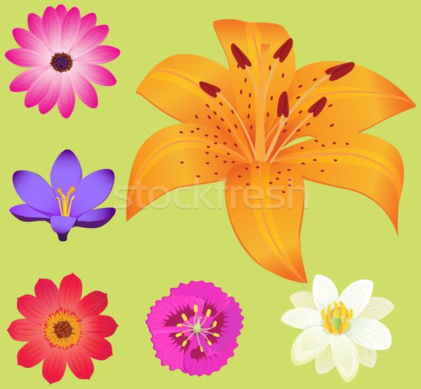 Jaune Lily fleur fleurs affiche autour Photo stock © robuart