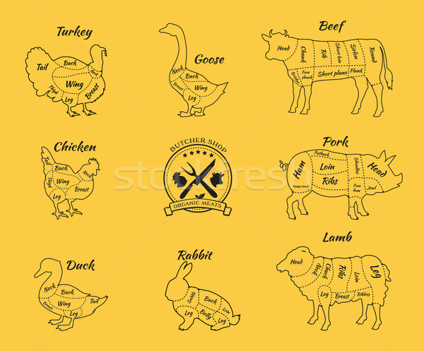 Set Schematic Vew of Animals for Butcher Shop Stock photo © robuart
