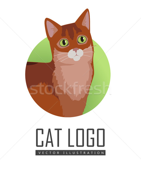 Somali Cat Vector Flat Design Illustration Stock photo © robuart