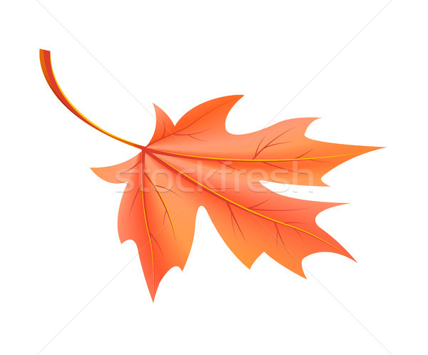 Red Autumn Leaf Fallen from Maple Tree Vector Stock photo © robuart