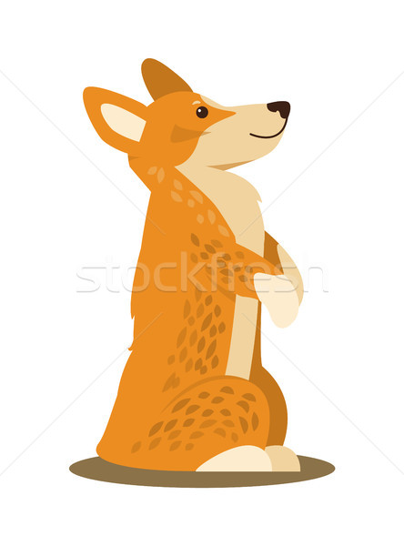 Dog Standing on Paws, Poster Vector Illustration Stock photo © robuart