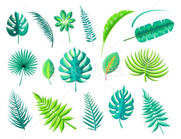 Tropicales follaje colección hojas diferente formas Foto stock © robuart