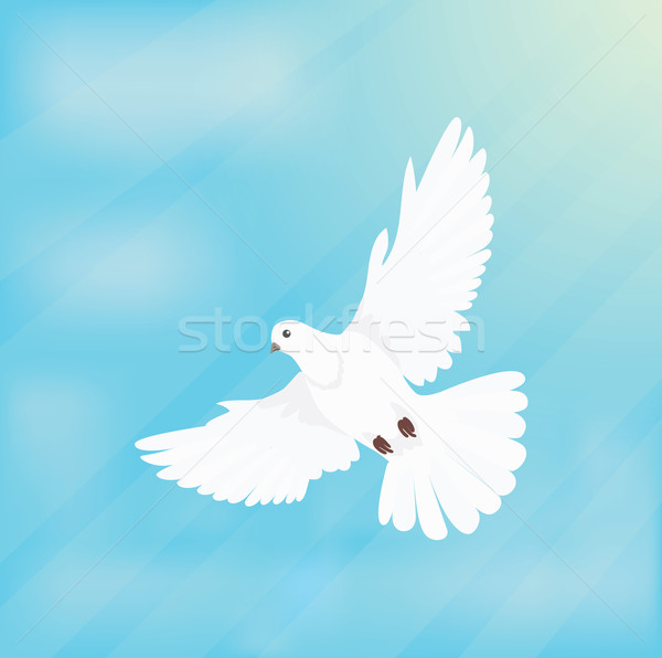 White Dove Soars in Space Design Flat Stock photo © robuart