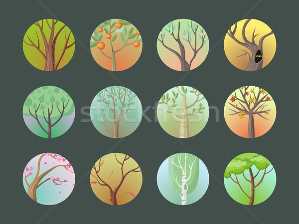 Vektör ağaçlar ayarlamak toplama farklı meşe Stok fotoğraf © robuart