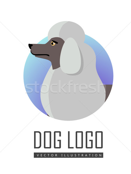 Dog Logo Vector of White Standard Poodle Isolated. Stock photo © robuart