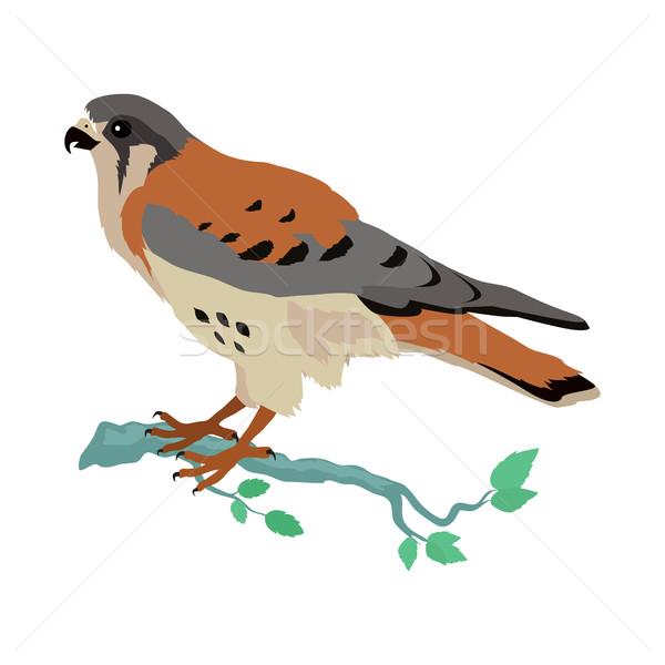 Americano projeto vetor aves animais selvagens estilo Foto stock © robuart