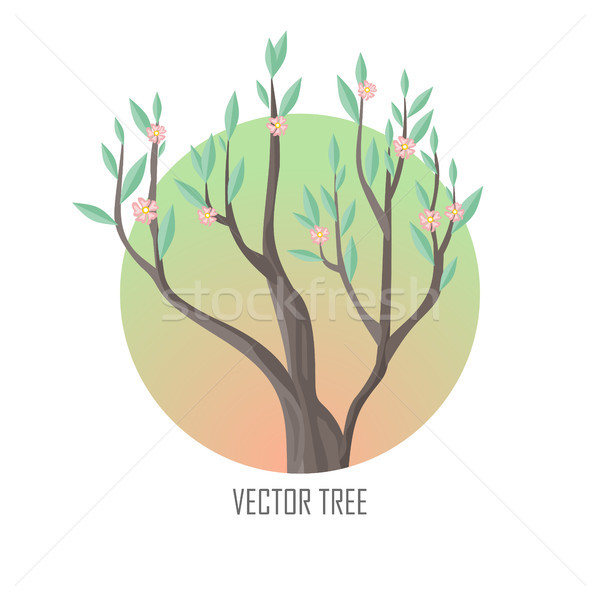 Tree with Green Leaves and Pink Flowers Stock photo © robuart