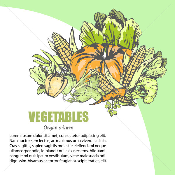 Fresh Vegetable Assortment with Text Information Stock photo © robuart