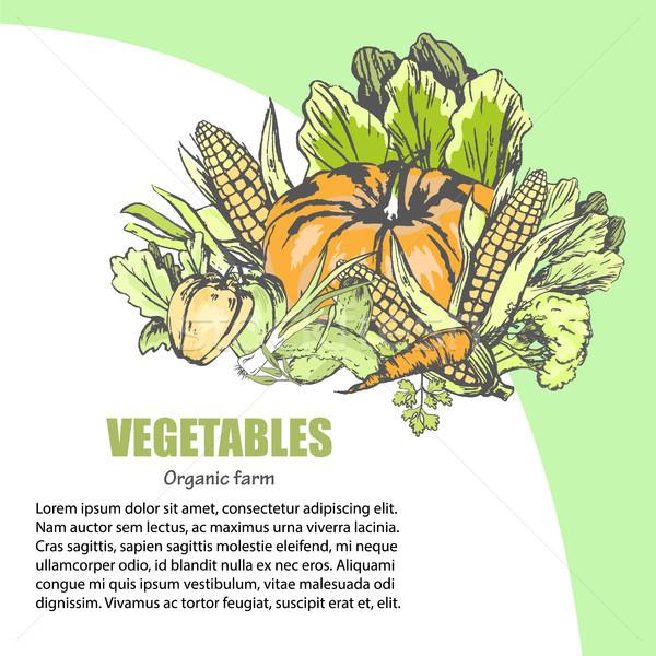 Légumes frais assortiment texte informations légumes frais vecteur Photo stock © robuart