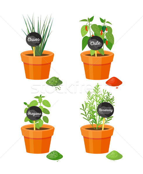 Chives and Rosemary Plants Vector Illustration Stock photo © robuart
