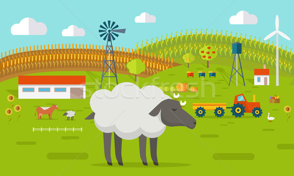 Sheep on Farmyard Concept Illustration.   Stock photo © robuart