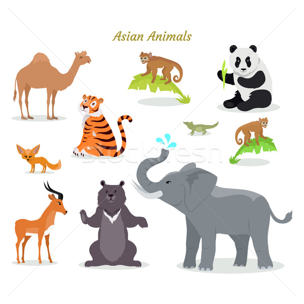 Asian Animals Fauna Species. Camel, Panda, Tiger, Stock photo © robuart