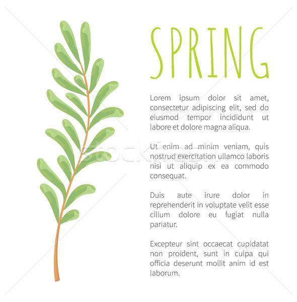 Primavera ramoscello minuscolo foglie poster botanico Foto d'archivio © robuart