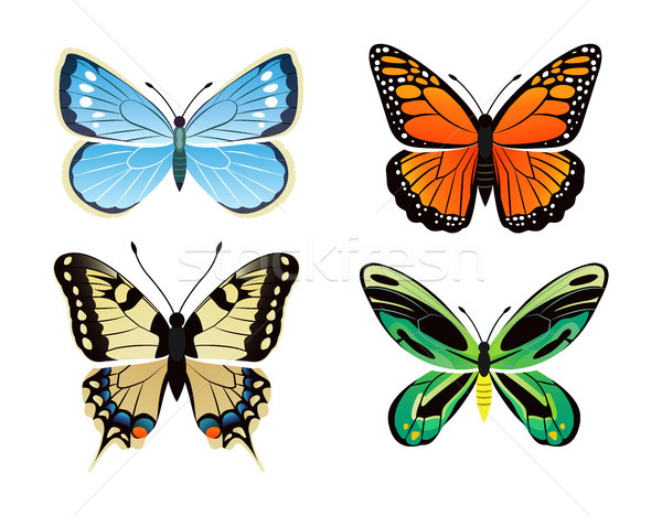 Butterflies Kinds Collection Vector Illustration Stock photo © robuart
