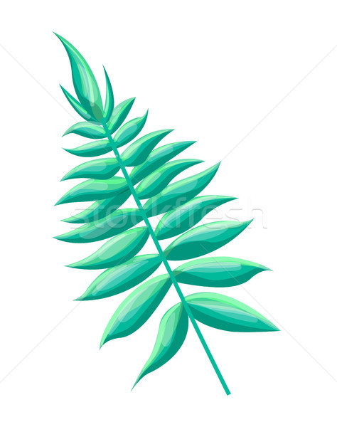 Royal Fern Tropical Leaf, Vector Illustration Stock photo © robuart