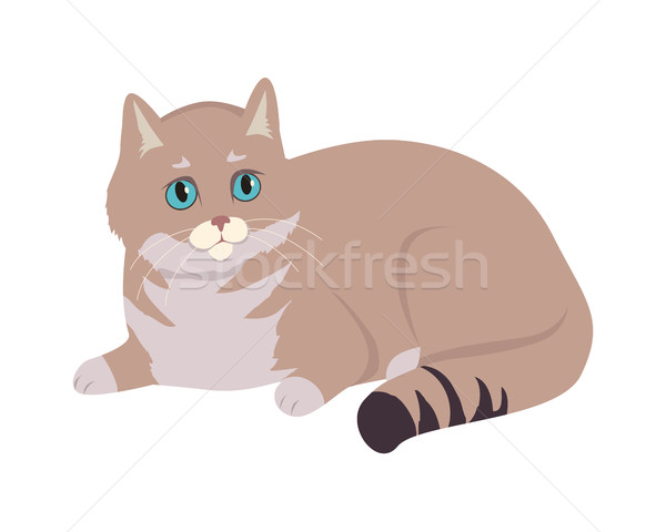 European Shorthair Cat Flat Vector Illustration Stock photo © robuart