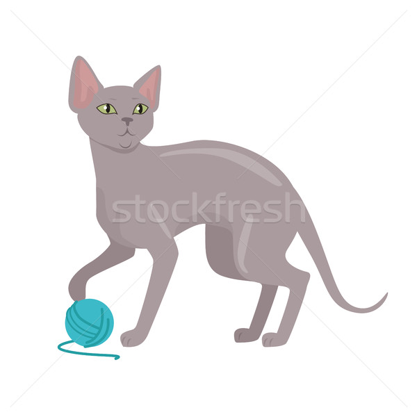 Peterbald cat Vector Flat Design Illustration Stock photo © robuart