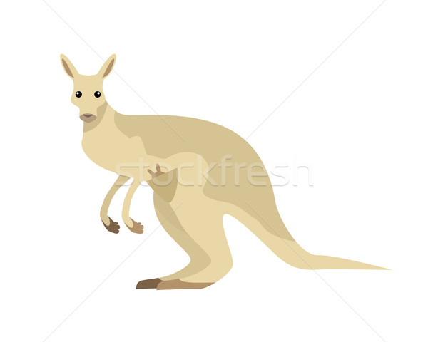 Kangaroo Vector Illustration in Flat Design Stock photo © robuart
