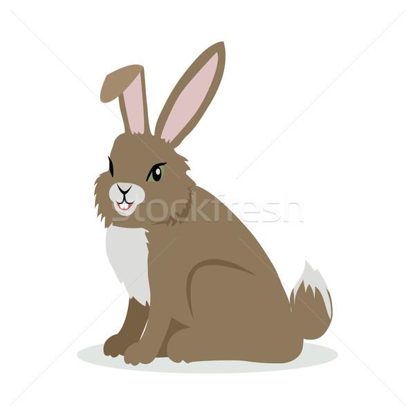 заяц Cartoon дизайна кролик коричневый Сток-фото © robuart