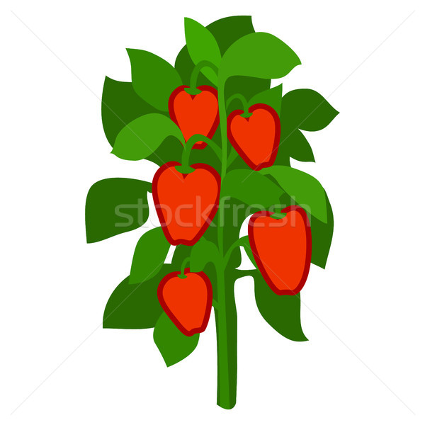 Homegrown Ripe Red Bell Peppers with Green Leaves Stock photo © robuart