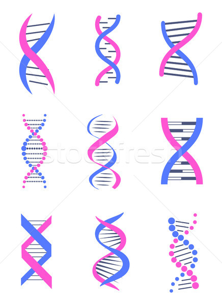 Set of DNA Thread Like Chains Colorful Banner Stock photo © robuart