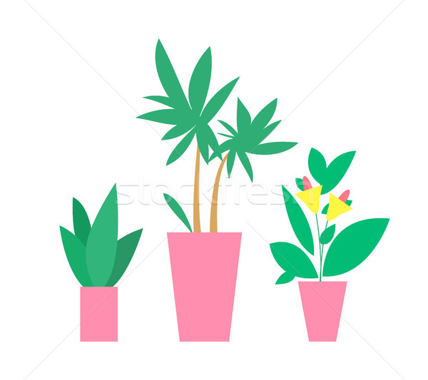 Plants in Pots Interior Decor Vector Illustration Stock photo © robuart