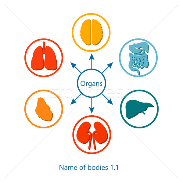 Stock photo: Name of Bodies and Organs Vector Illustration