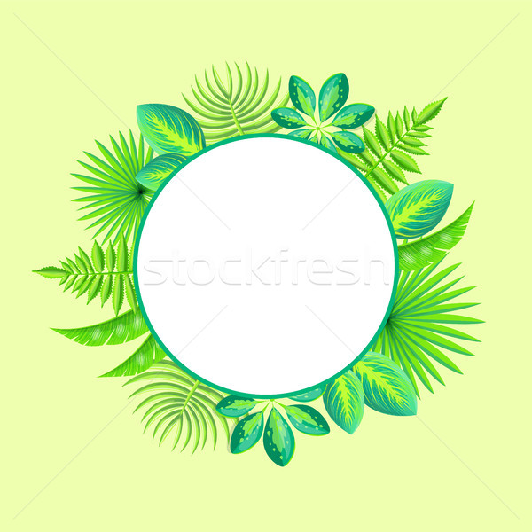Trópusi szalag fölösleges hely szöveg keret Stock fotó © robuart