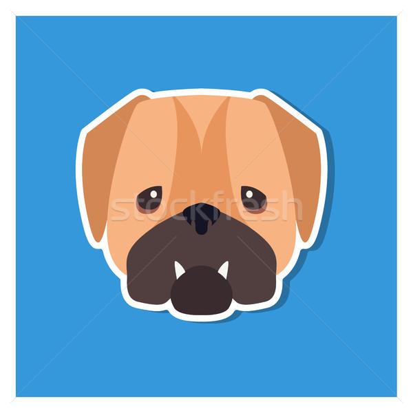 Stock photo: Dolorous Muzzle of English Bulldog Drawn Art Icon