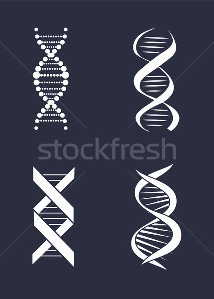 Collection of DNA Deoxyribonucleic Acid Chain Logo Stock photo © robuart