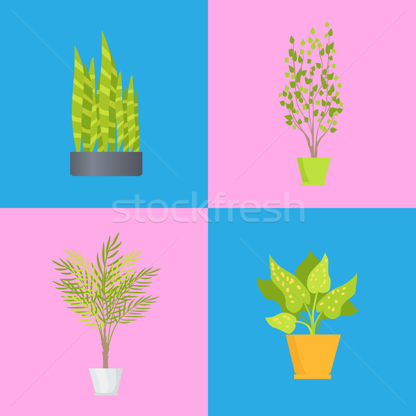 Interior Decoration Plants Set Vector Illustration Stock photo © robuart