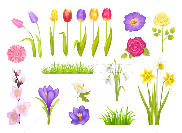Flowers Collection Poster Vector Illustration Stock photo © robuart