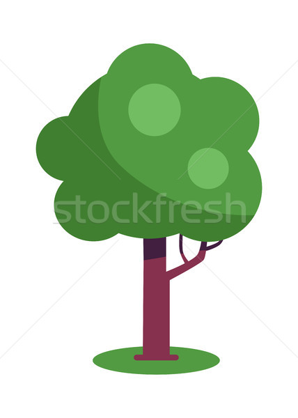 Tree with Massive Trunk and Green Leaves Vector Stock photo © robuart