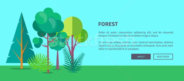 Stock photo: Forest Vector Web Banner with Trees and Bushes