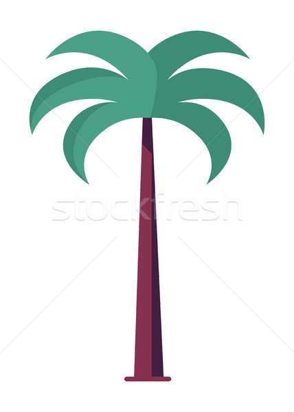 Palm Tree Massive Trunk and Green Leaves Vector Stock photo © robuart