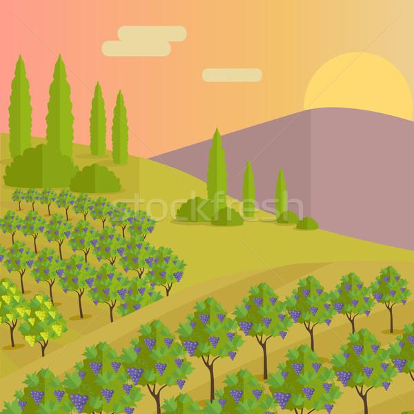 Szőlőskert ültetvény szőlő megnőtt borkészítés mazsola Stock fotó © robuart