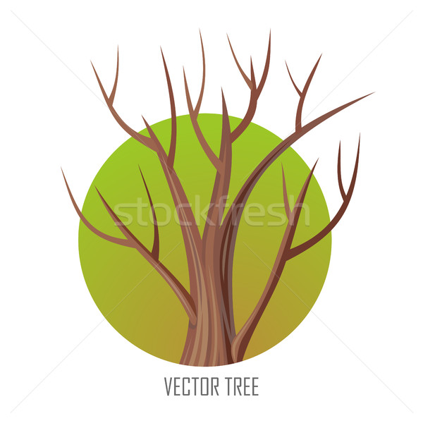 Isolated Oak Tree Without Leaves Stock photo © robuart