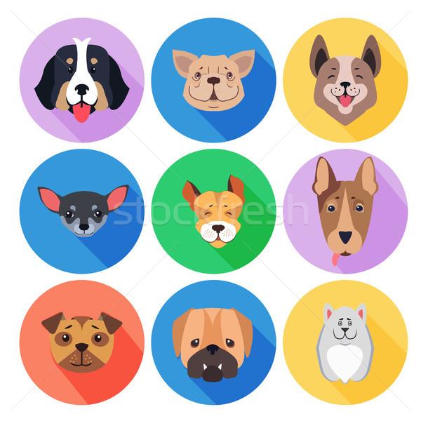 Fajtiszta kutyák színes kör ikonok hegy Stock fotó © robuart