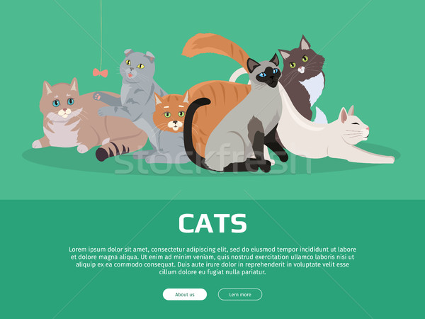 Cat Breeds Cute Pet Animal Set Vector Web Banner. Stock photo © robuart