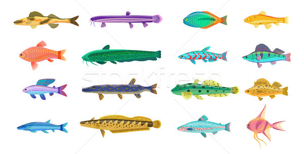 Sea and Freshwater Fishes with Bright Scales Stock photo © robuart
