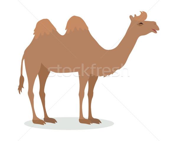 Bactrian Camel Cartoon Icon in Flat Design Stock photo © robuart