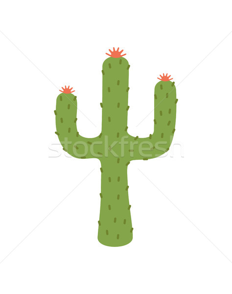 Cactus Plant Image Closeup Vector Illustration Stock photo © robuart