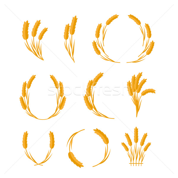 Set of Wheat Ears Vector Concepts in Flat Design.  Stock photo © robuart