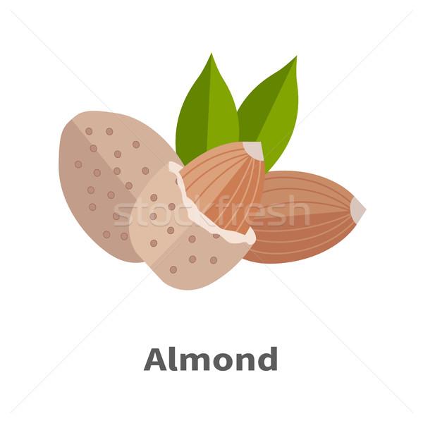 Amandel noten ontwerp vector traditioneel ruw Stockfoto © robuart