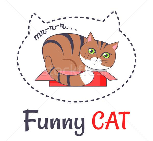 Foto stock: Engraçado · marrom · gato · dormir · abrir · vermelho